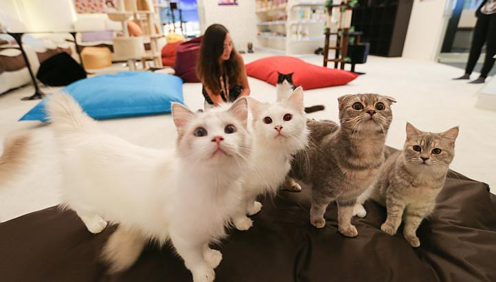 Catcafe241014e